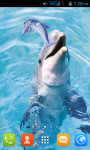 Cute Dolphin Live Wallpaper Free screenshot 1/5