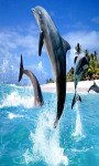 Cute Dolphin Live Wallpaper Free screenshot 2/5