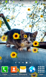 Kitty Live Wallpapers screenshot 2/6