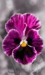 Flower Glitter Live Wallpaper screenshot 1/3