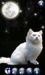 White Cute Cat screenshot 4/4