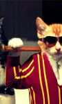 Funny Cat styles Pictures  screenshot 3/6
