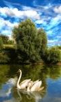 Swan Lake Lwp screenshot 1/3