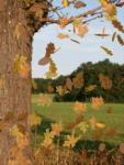 Autumn Lite screenshot 1/1