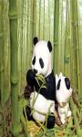 Panda Cartoon Live Wallpaper Free screenshot 3/4