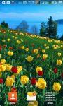 Beautiful Tulips HD Wallpaper screenshot 2/6