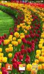 Beautiful Tulips HD Wallpaper screenshot 3/6