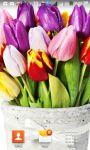 Beautiful Tulips HD Wallpaper screenshot 4/6