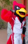 Arizona Cardinals fan screenshot 3/3