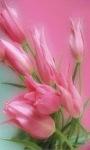 Color Changing Flower LWP2 screenshot 2/3