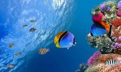 Free Amazing Deep Blue Sea Wallpaper screenshot 2/6