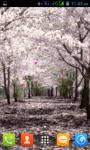 Sakura Flower Live Wallpaper Best screenshot 1/5
