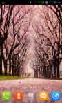 Sakura Flower Live Wallpaper Best screenshot 2/5