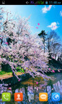 Sakura Flower Live Wallpaper Best screenshot 3/5