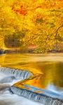 Golden Nature Live Wallpaper screenshot 2/3