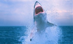 Shark HD Wallpapers screenshot 1/4