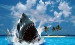 Shark HD Wallpapers screenshot 4/4