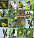 Bird Hunter 2014 screenshot 2/2