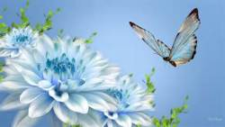 Beautiful Butterfly Image Wallpaper screenshot 1/6