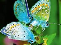 Beautiful Butterfly Image Wallpaper screenshot 5/6