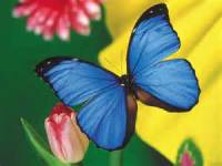 Beautiful Butterfly Image Wallpaper screenshot 6/6