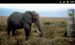 African Animals - Wallpaper Slideshow screenshot 1/6