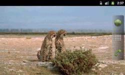 African Animals - Wallpaper Slideshow screenshot 3/6