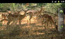 African Animals - Wallpaper Slideshow screenshot 4/6