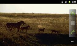 African Animals - Wallpaper Slideshow screenshot 6/6