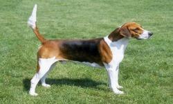 Cool Beagles Puzzles screenshot 3/6