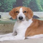 Cool Beagles Puzzles screenshot 4/6