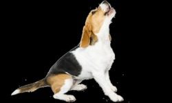Cool Beagles Puzzles screenshot 5/6