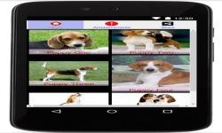 Cool Beagles Puzzles screenshot 6/6