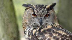 Cute Owl Wallpaper screenshot 1/6
