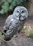 Cute Owl Wallpaper screenshot 2/6