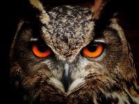 Cute Owl Wallpaper screenshot 3/6