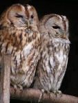 Cute Owl Wallpaper screenshot 4/6