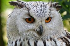 Cute Owl Wallpaper screenshot 5/6