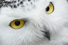 Cute Owl Wallpaper screenshot 6/6