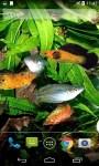 Amazing Aquarium Live Wallpaper screenshot 3/4