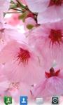 Cherry Blossoms Live  Wallpaper screenshot 1/3
