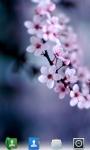 Cherry Blossoms Live  Wallpaper screenshot 2/3