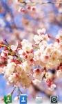 Cherry Blossoms Live  Wallpaper screenshot 3/3