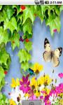 Cute Butterfly Live Wallpaper screenshot 2/4