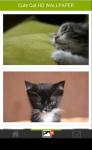 Cute Cat HD Wallpaper  screenshot 1/4