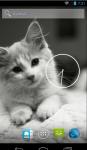 Cute Cat HD Wallpaper  screenshot 2/4