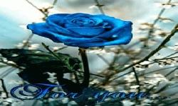 Rose Flowering Live Wallpaper screenshot 2/3
