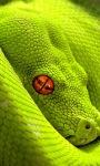 Green Snake Live Wallpaper screenshot 2/3