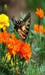 Find Differences Butterflies screenshot 2/4