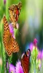 Find Differences Butterflies screenshot 3/4